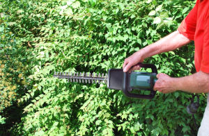 Hedge Trimming Finchley